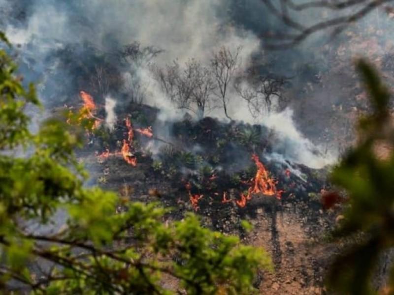 Incendio consume 234 hectáreas en Tepoztlán