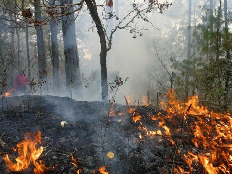 Incendios forestales afectan 44 mil hectáreas en Oaxaca