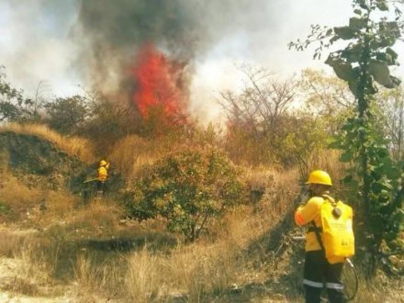 Incendios forestales consumen selvas de Oaxaca por tercer día consecutivo