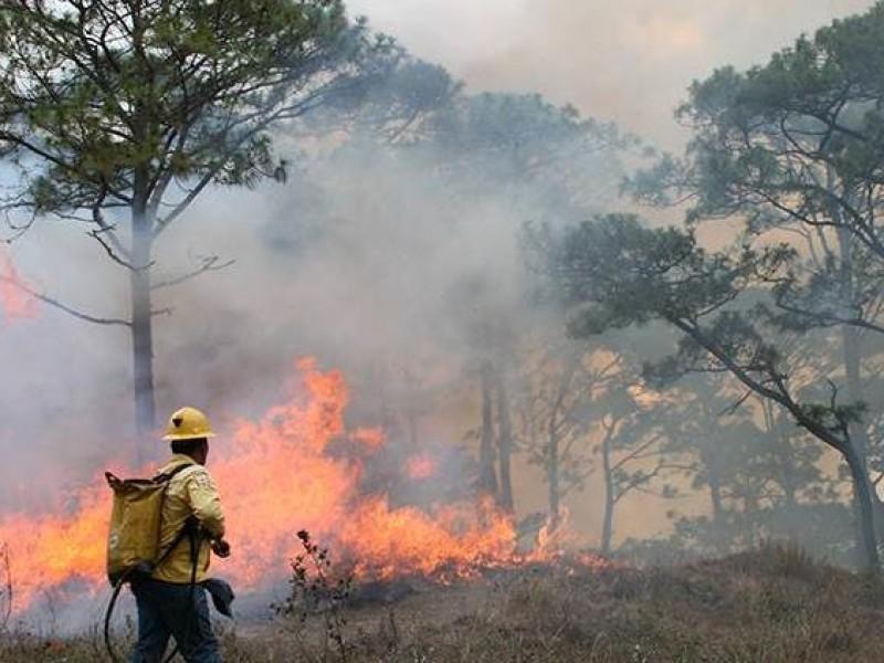 Incendios forestales podrían tener un repunte en el 2021