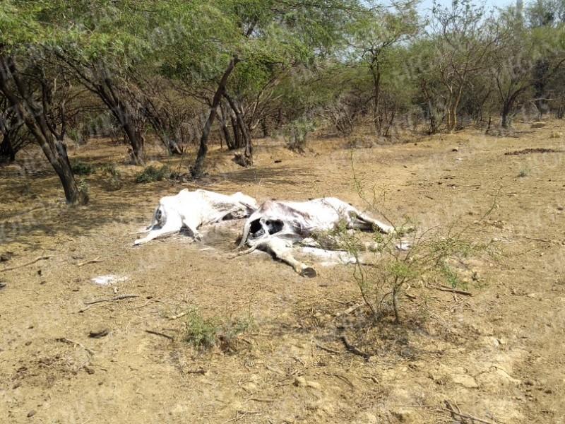 Incendios forestales y sequía afectan a ganaderos