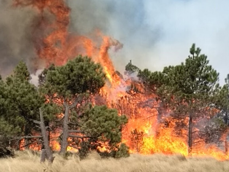 Incendios han consumido más de 7 mil hectáreas en Chiapas