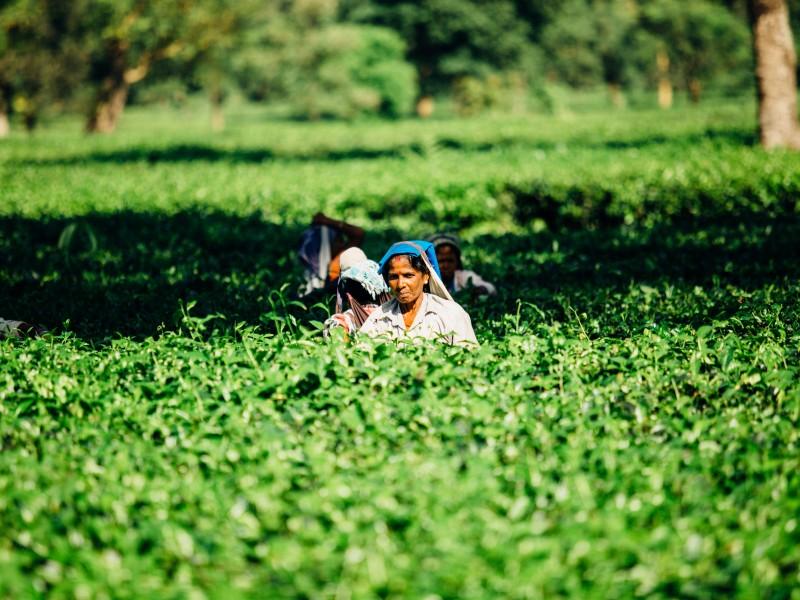 Incrementa participación de mujeres y jóvenes en el campo