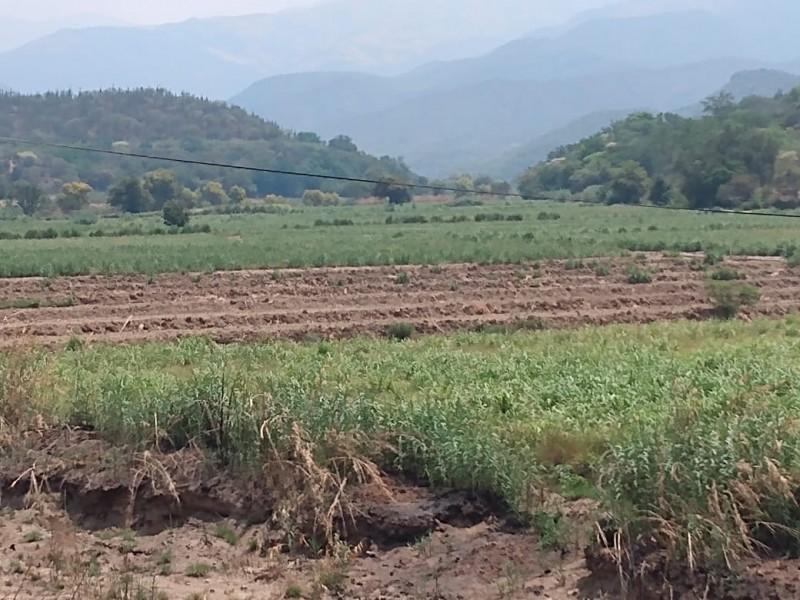Incrementa producción y exportación agrícola en Cuayucatepec