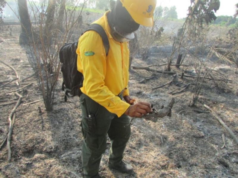 Incrementan incendios en Áreas Naturales Protegidas de Chiapas