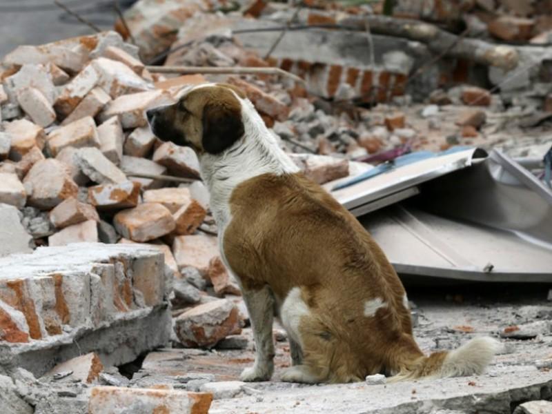 Inicia campaña contra abandono de animales