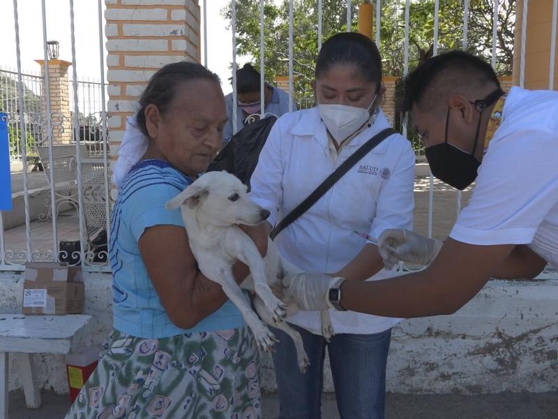 Inicia programa de vacunación antirrábica 2021 en Tehuantepec
