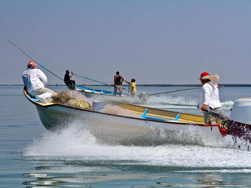 Inicia temporada de pesca del camarón en la ZN