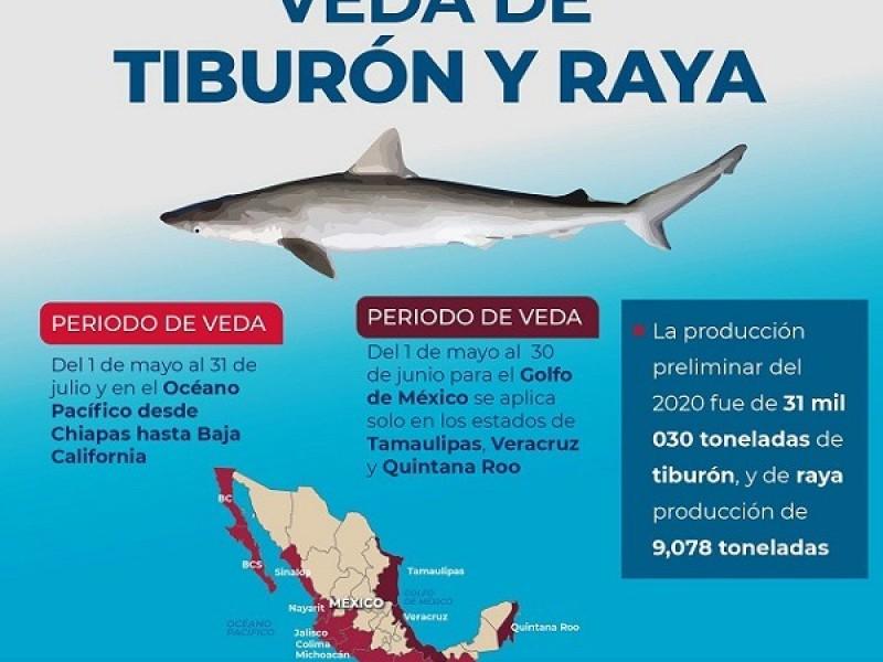 Inicia veda de tiburones, rayas y jaiba en litoral mexicano