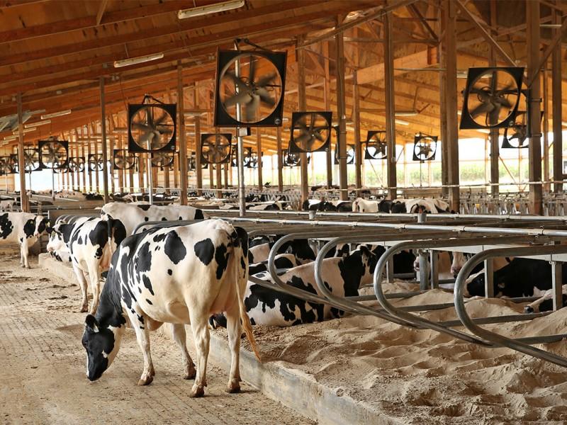 Inician ganaderos acciones para mitigar efectos de sequia