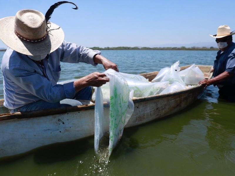 Inician reactivación económica de sector pesquero nayarita