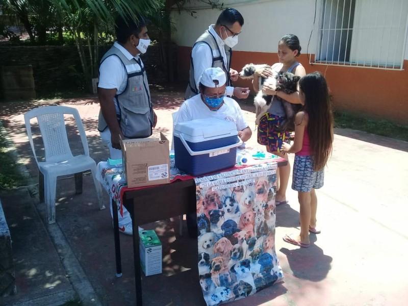 Inició jornada nacional de vacunación antirrábica en Zihuatanejo
