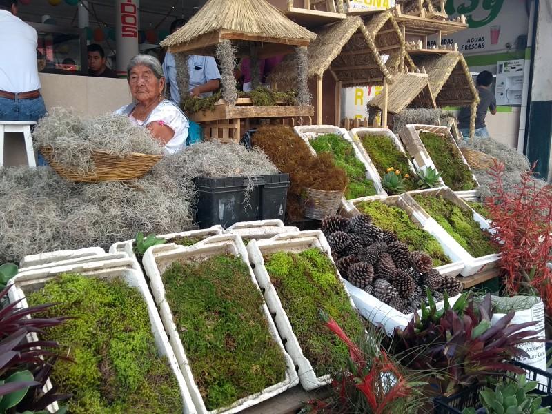 Inició la venta ilegal de heno y musgo