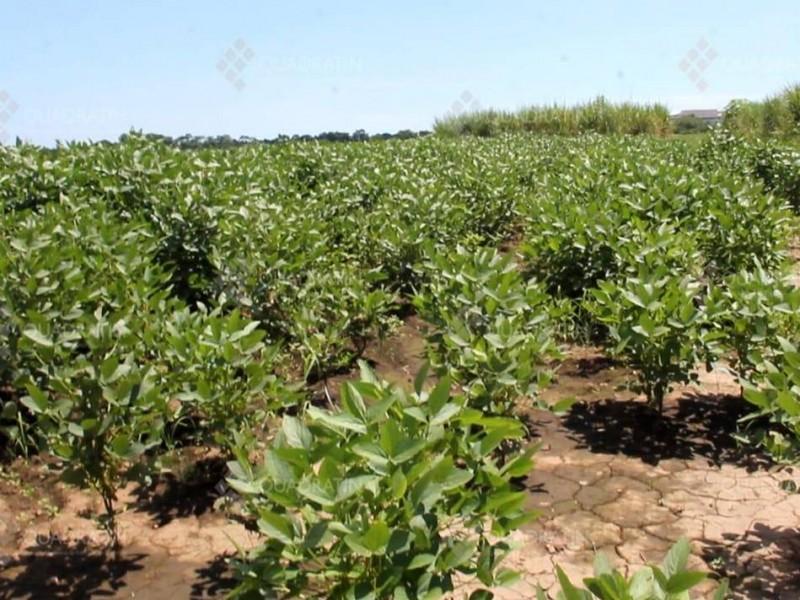 insuficiente apoyo para el campo señalan productores de soya