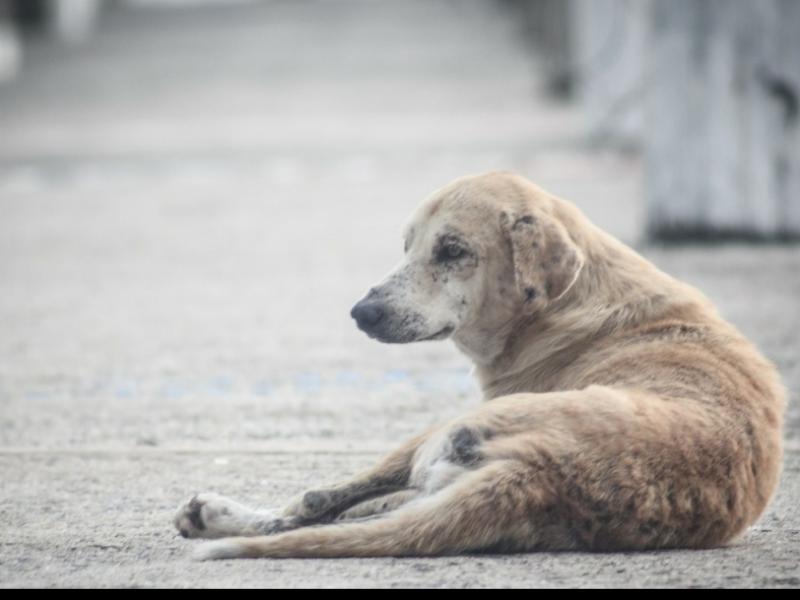 Intensifican promoción del cuidado animal en Zamora