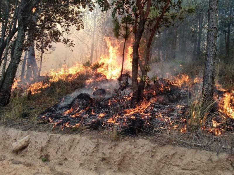 Intensos trabajos para sofocar incendio en Perote