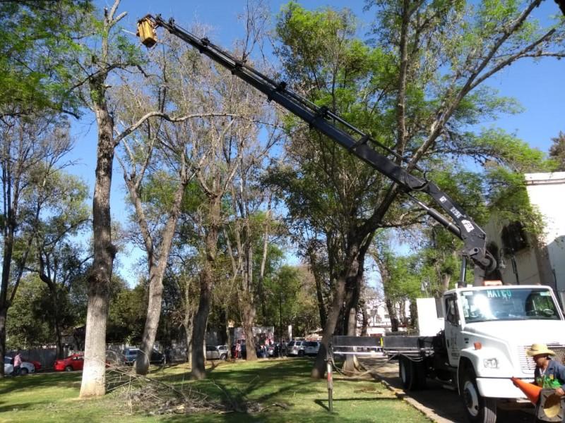 Intervendrán 63 árboles del bosque Cuauhtémoc