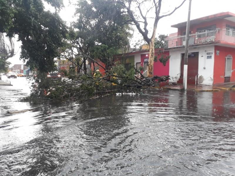 Inundaciones y árboles caídos tras tormenta