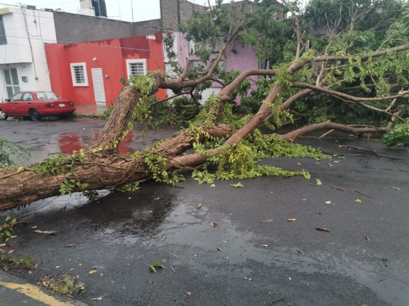 Inundaciones y árboles caídos tras la lluvia de esta tarde