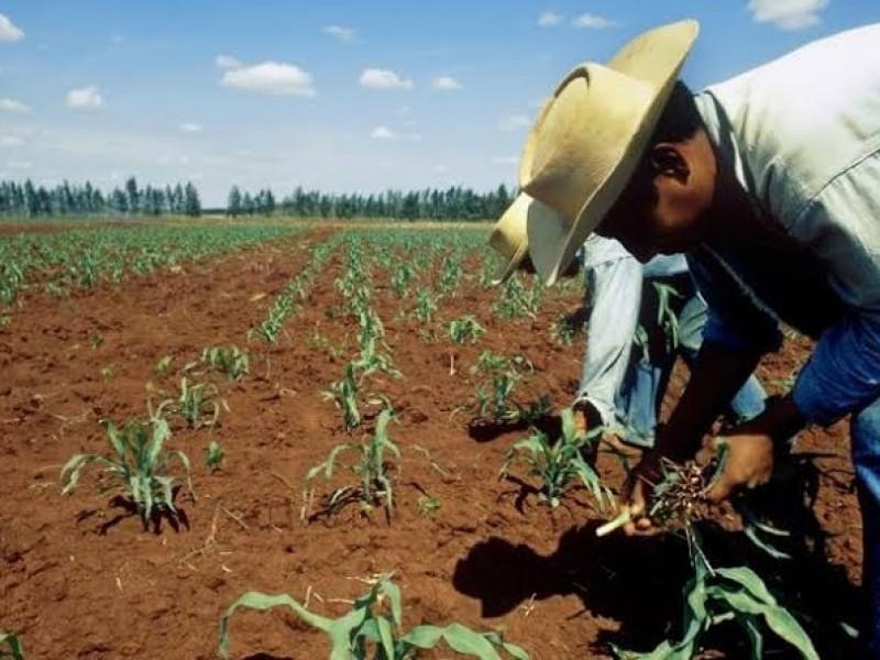 Investigan a líderes campesinos por presunta corrupción