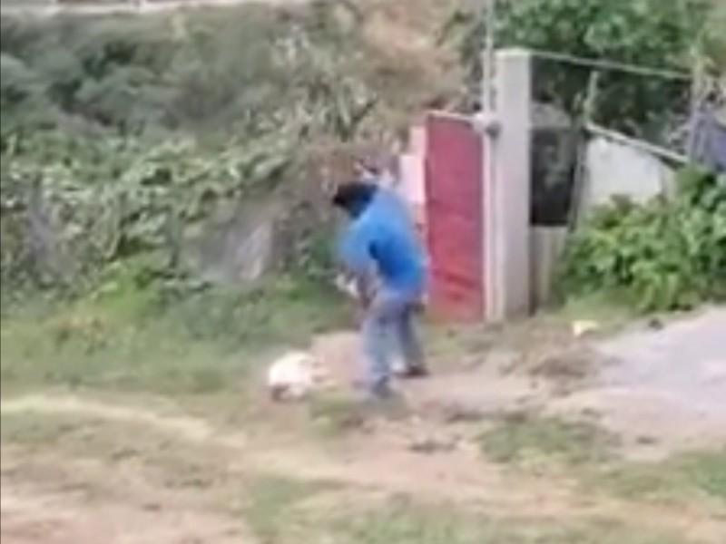 Investigan muerte de Masha. Perro maltratado en Ixtapaluca