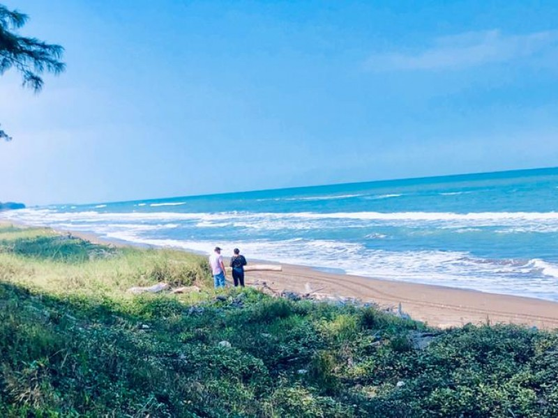 Investigan varamiento de ballena en Tuxpan