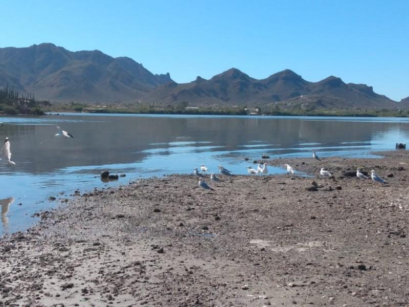 Investigarán muerte de patos y aves en Guaymas