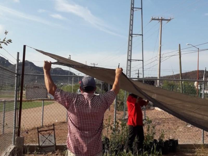 Invita Ecología a reforestar Guaymas
