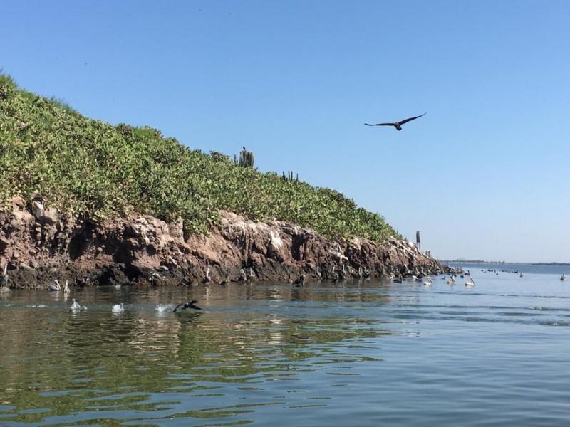 Isla de los patos,reserva natural sobre la bahía de Topolobampo