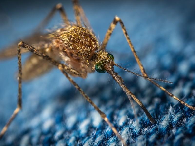 Jalisco primer lugar por muertes por dengue