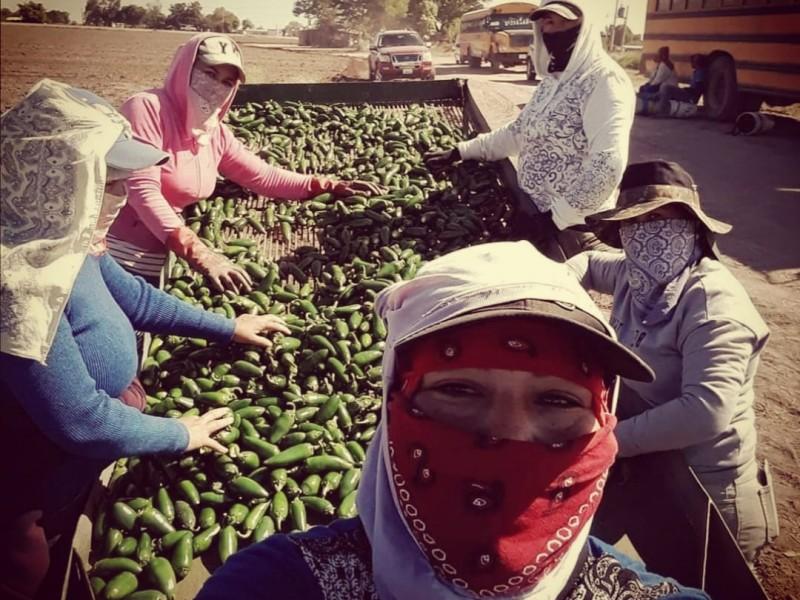 Jornaleros agrícolas en México sufren la falta de trabajo