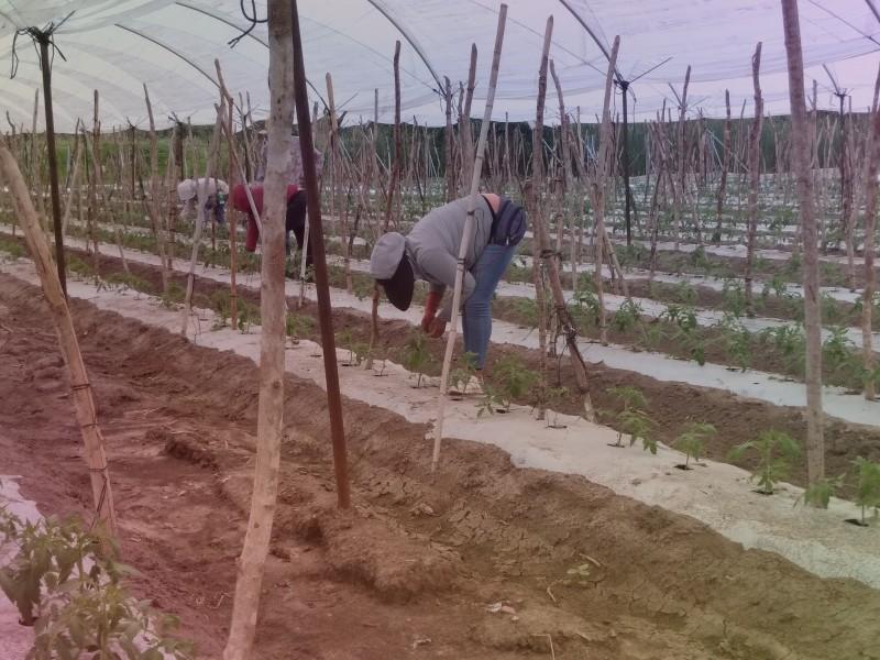Jornaleros migrantes viven entre la pobreza y el rezago social