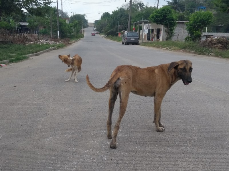 JSN2 niega apoyo para esterilización a mascotas