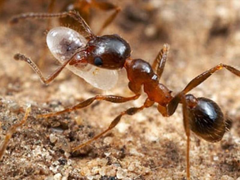 La actividad de las Hormigas y el petróleo