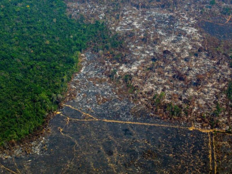 La Amazonia alcanza su mayor nivel en deforestación desde 2008