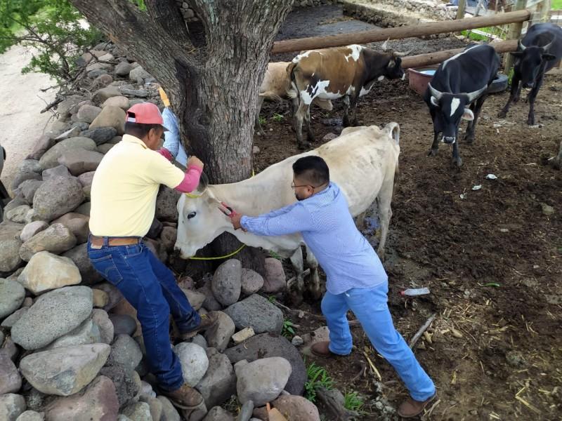 La dirección de desarrollo agropecuario Escobedense identifica ganado
