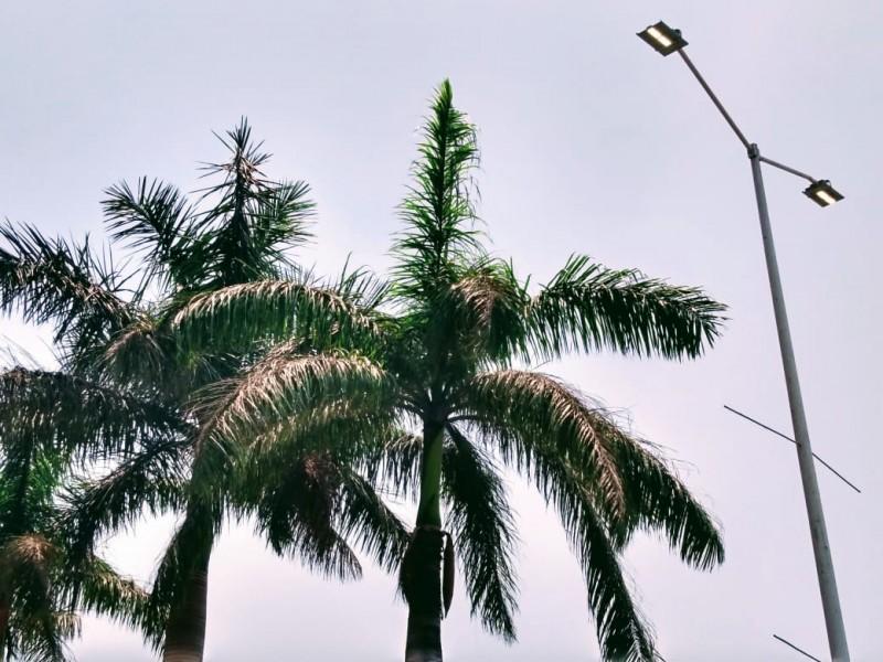 La falta de fotocontactores mantiene encendidas las luminarias 24 horas