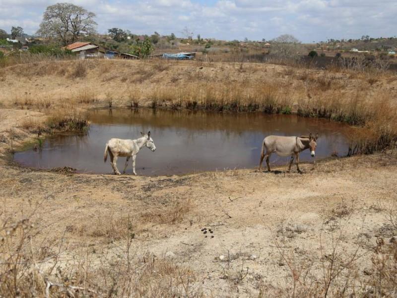 'La Niña' golpea a la región con una fuerte sequía