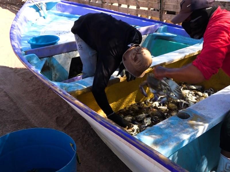 La pesca de camarón ya no es la misma