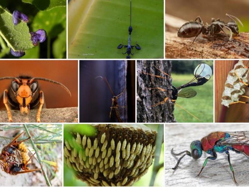 Lanzan convocatoria fotográfica para salvar especies de abejas mexicanas
