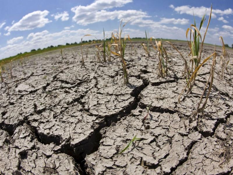 Las pocas lluvias afectan los cultivos