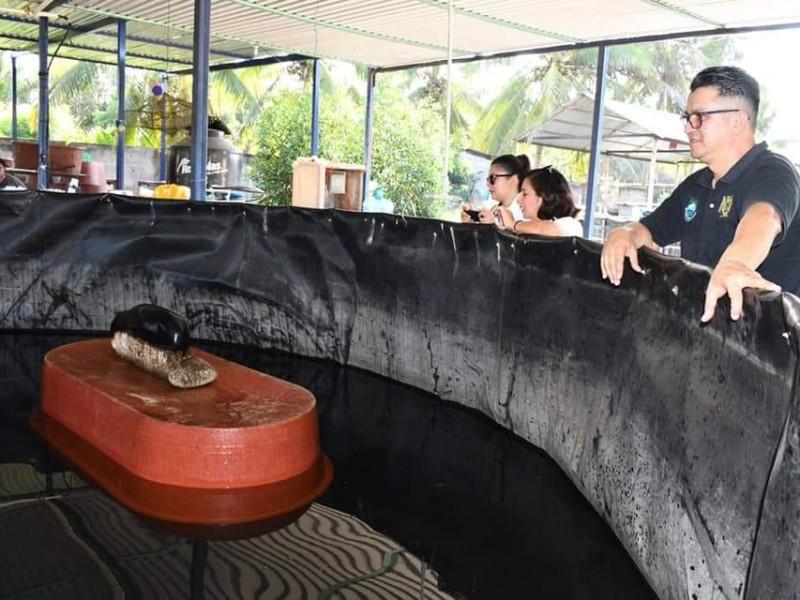 Liberan dos lobos marinos en Tapachula