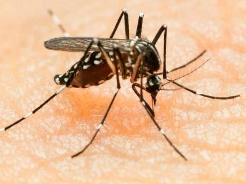 Lidera Guaymas casos de Zika en Sonora