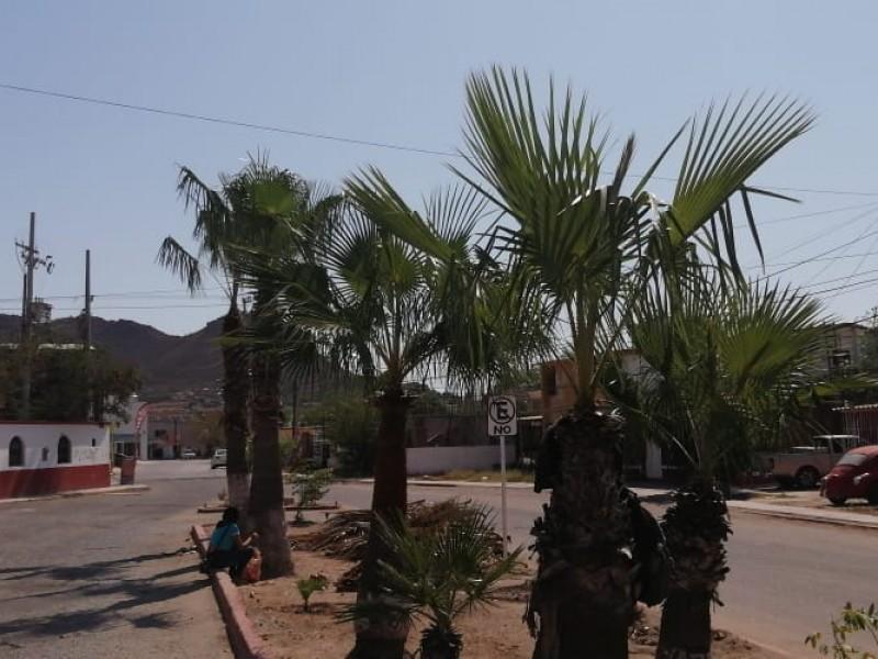 Limpia SPM plazas y calles del norte del Puerto