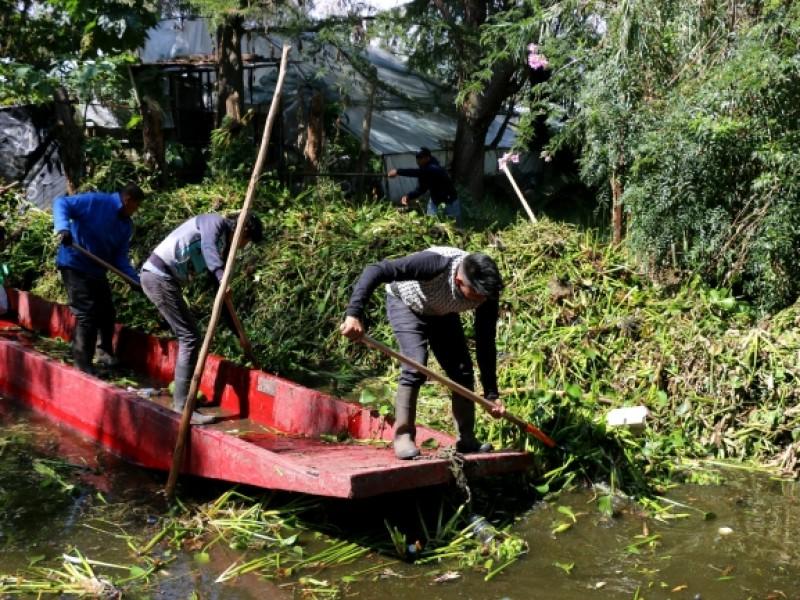Limpian canales de Xochimilco