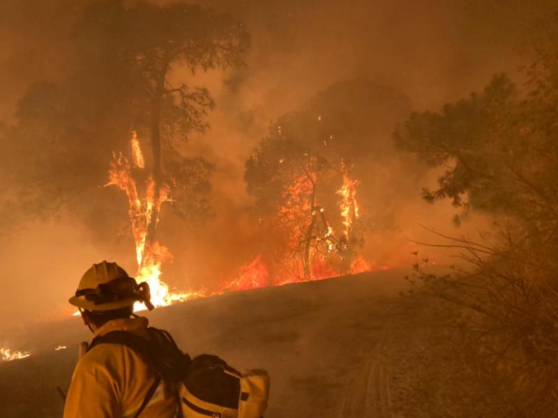 Liquidan incendio en paraje Las Tortugas de Bosque La Primavera.