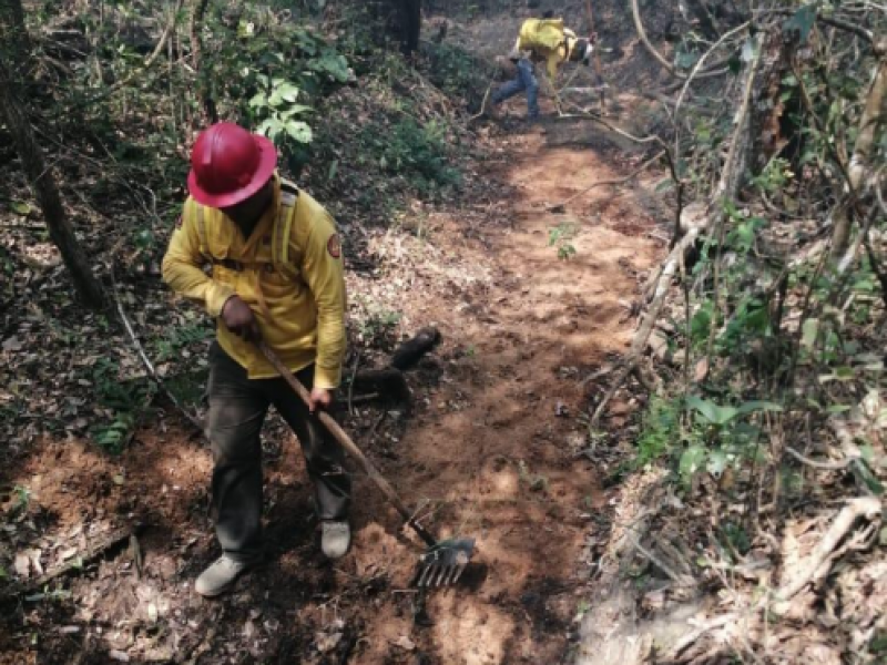 Liquidados incendios forestales activos reportan autoridades ambientales