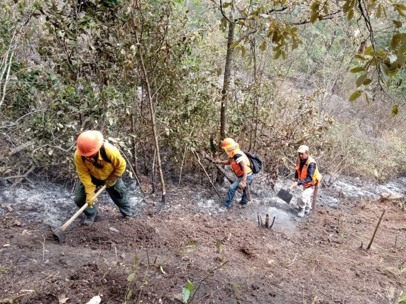Liquidan incendio forestal en Maltrata