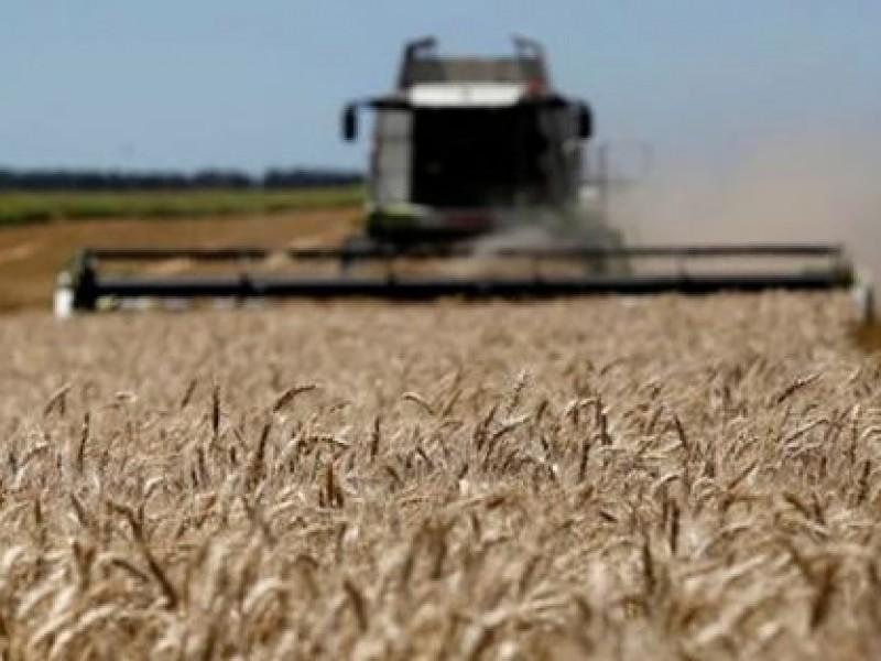 Listos productores agrícolas para la zafra de trigo