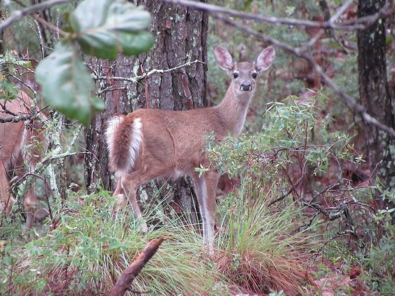 Llaman a proteger a fauna silvestre frente al COVID-19